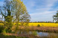 Wriezener Alte Oder mit einem Rapsfeld, Bad Freienwalde, Oderbruch, Märkisch Oderland, Brandenburg, Deutschland