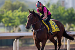 SHA TIN,HONG KONG-DECEMBER 09: Takedown,trained by Gary Moore,exercises in preparation for the Hong Kong at Sha Tin Racecourse on December 9,2016 in Sha Tin,New Territories,Hong Kong (Photo by Kaz Ishida/Eclipse Sportswire/Getty Images)