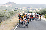 The peloton during Stage 11 of La Vuelta d'Espana 2021, running 133.6km from Antequera to Valdepeñas de Jaén, Spain. 25th August 2021.     <br /> Picture: Luis Angel Gomez/Photogomezsport | Cyclefile<br /> <br /> All photos usage must carry mandatory copyright credit (© Cyclefile | Luis Angel Gomez/Photogomezsport)