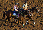 October 27, 2014:  Don't Tell Sophia, trained by Phil Sims, exercises in preparation for the Breeders' Cup Distaff at Santa Anita Race Course in Arcadia, California on October 27, 2014.John Voorhees/ESW/CSM