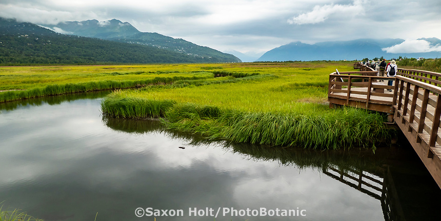 Potter's Marsh, BIrd habitat overlook, Alaska
