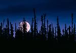 Moonrise over boreal forest, Northwest Territories, Canada<br /> <br /> Canon EOS-1N, EF lens, Fujichrome Provia 400 film