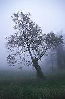 Single tree in fog<br />