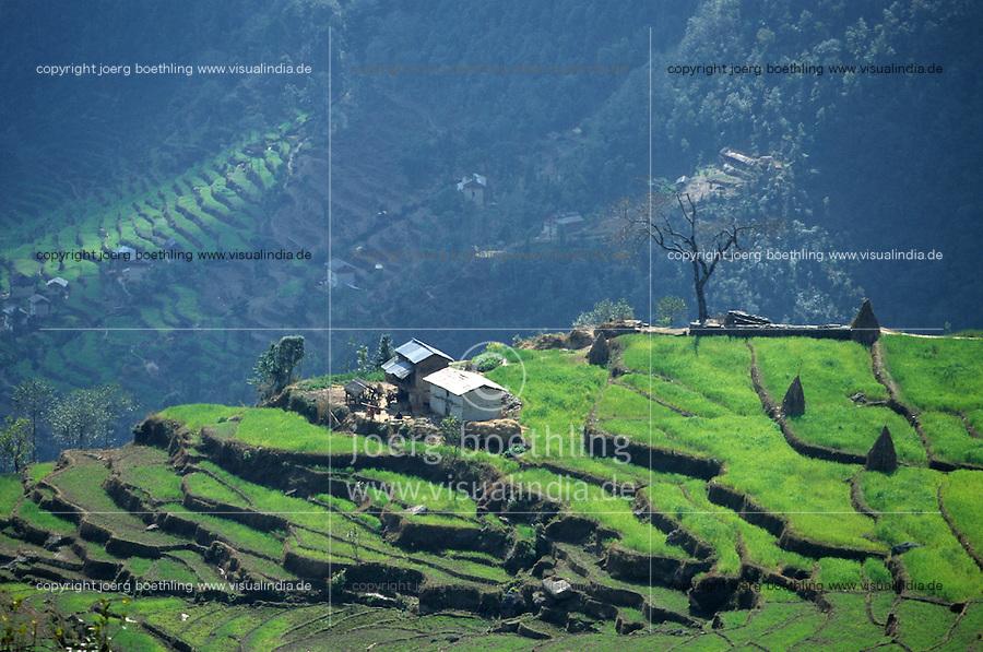 NEPAL Himalaya, Sherpa village Suri, terrace fields with wheat in mountains / NEPAL Himalaja, Terrassenfelder mit Weizen des Sherpa Dorf Suri in Berghaengen im Himalaya Gebirge