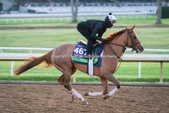 November 5, 2020: Uni, trained by trainer Chad C. Brown, exercises in preparation for the Breeders' Cup Mile at Keeneland Racetrack in Lexington, Kentucky on November 5, 2020. Scott Serio/Eclipse Sportswire/Breeders Cup/CSM