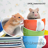 Xavier, ANIMALS, REALISTISCHE TIERE, ANIMALES REALISTICOS, photos+++++,SPCHHAMSTER193,#A#, EVERYDAY ,funny