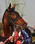 Magesty Bio wins the Nakayama Daishogai at Nakayama Racecourse on December 24th, 2011