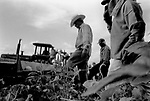 Migrant workers in the field, Conesville, 2006