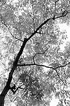 A Backlit Tree By West Lake, Hangzhou.
