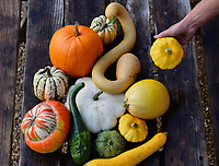 Colourful autumn Harvest at Forde Abbey.<br /> <br /> The colourful pumpkins, squashes and gourds at the Forde Abbey Monastery on the Dorset/Somerest boarder.<br /> <br /> Forde Abbey is a former Cistercian monastery dating back to the early 12th century
