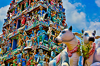 Colorful Sri Mariamman Hindu temple with sacred cow statues in the foreground, in the Chinatown area of Singapore, Southeast Asia