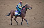 October 26, 2015 :  Ordak Dan (ARG), trained by Juan C. Etchechoury and owned by Stud Misterio, exercises in preparation for the Longines Breeders' Cup Turf at Keeneland Race Track in Lexington, Kentucky on October 26, 2015. in Lexington, Kentucky. Scott Serio/ESW/CSM