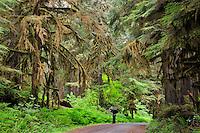 Photographer in Carbon River Old Growth Rainforest, Mount Rainier National Park