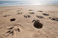 Naturkunst am Strand, Kind, Kinder formen aus Sand Meeresschildkröte, Jungtiere schlüpfen aus ihren Eiern und wandern ins Meer, Meeresschildkröten, Schildkröte, Schildkröten am Sandstrand, Strandkunst, Strand, Meer, Küste
