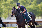 SHA TIN,HONG KONG-DECEMBER 09: Silverwave,trained by Pascal Bary,,exercises in preparation for the Hong Kong Vase at Sha Tin Racecourse on December 9,2016 in Sha Tin,New Territories,Hong Kong (Photo by Kaz Ishida/Eclipse Sportswire/Getty Images)