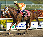20 March 2010: Boots Ahead after the Appleton Stakes at Gulfstream Park in Hallandale Beach, FL.