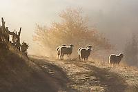 Zaovine, Tara National Park, Serbia.