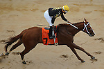 HOT SPRINGS, AR - MARCH 12: Luna De Loco with jockey Ricardo Santana Jr. after crossing the finish line in the Homan Touch Classic at Oaklawn Park on March 12, 2016 in Hot Springs, Arkansas. (Photo by Justin Manning)