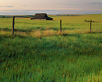 Sunrise light on old barn; McKenzie County; Little Missouri National Grasslands, ND