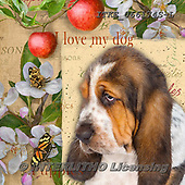 Isabella, REALISTIC ANIMALS, REALISTISCHE TIERE, ANIMALES REALISTICOS, paintings+++++,ITKE066174S-L,#a#, EVERYDAY ,dogs ,collage