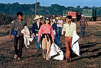 Voluntários para colheita de algodão em Leon. Nicarágua. 1981. Foto de Juca Martins.