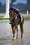 September 3, 2020:  Necker Island exercises as horses prepare for the 2020 Kentucky Derby and Kentucky Oaks at Churchill Downs in Louisville, Kentucky. The race is being run without fans due to the coronavirus pandemic that has gripped the world and nation for much of the year. Evers/Eclipse Sportswire/CSM