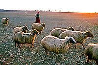 Pastor de ovelhas no Vale do Bekaa. Líbano. 1998. Foto de Ricardo Azoury.