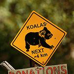 Panneau attention koalas. Ile de Kangourou (Australie du Sud)