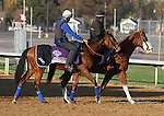 Questing, trained by John Gosden and to be ridden by William Buick , exercises in preparation for the 2011 Breeders' Cup at Churchill Downs on October 31, 2011.