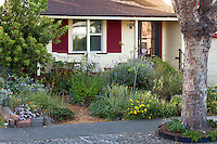 Sidewalk in front of Sibley drought tolerant front yard garden, Richmond California