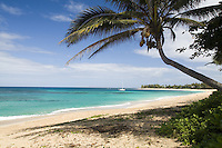 White sand beach with perfect blue water and palm tree at Sunset Beach, North Shore of Oahu