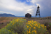 Flowering Sage Brush and old mining tower