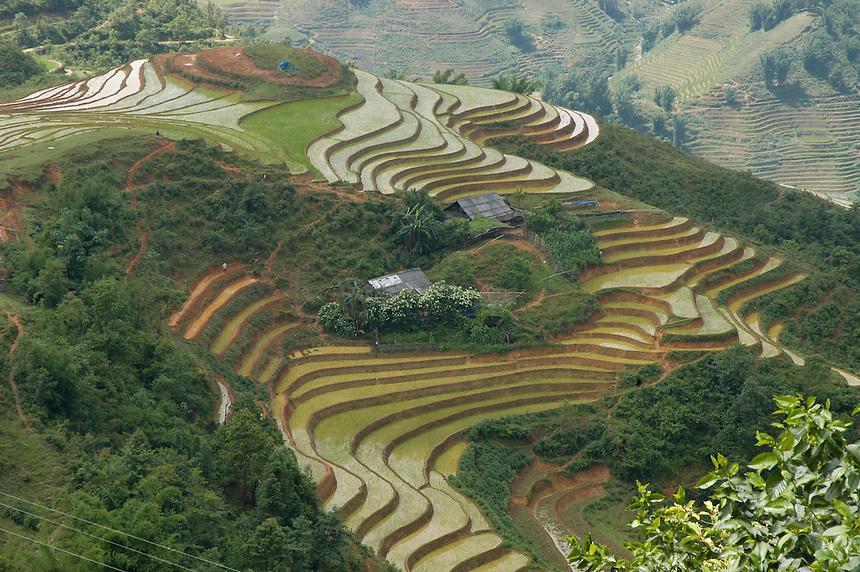 Terraced rice paddies Sapa Vietnam