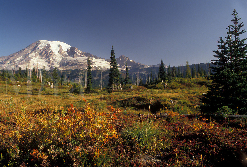 AJ3702, Mount Rainier, Mt. Rainier National Park, Cascades, Cascade Range, Washington, Spectacular view of the snow covered Mt. Rainier in the Cascade Mountain Range in Mount Rainier Nat'l Park in the state of Washington.
