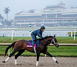 January 23, 2020: True Timber gallops as horses prepare for the Pegasus World Cup Invitational at Gulfstream Park Race Track in Hallandale Beach, Florida. Scott Serio/Eclipse Sportswire/CSM