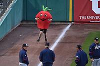 Vegetable Race between innings at Smith's Ballpark on May 5, 2014 in Salt Lake City, Utah.  (Stephen Smith/Four Seam Images)