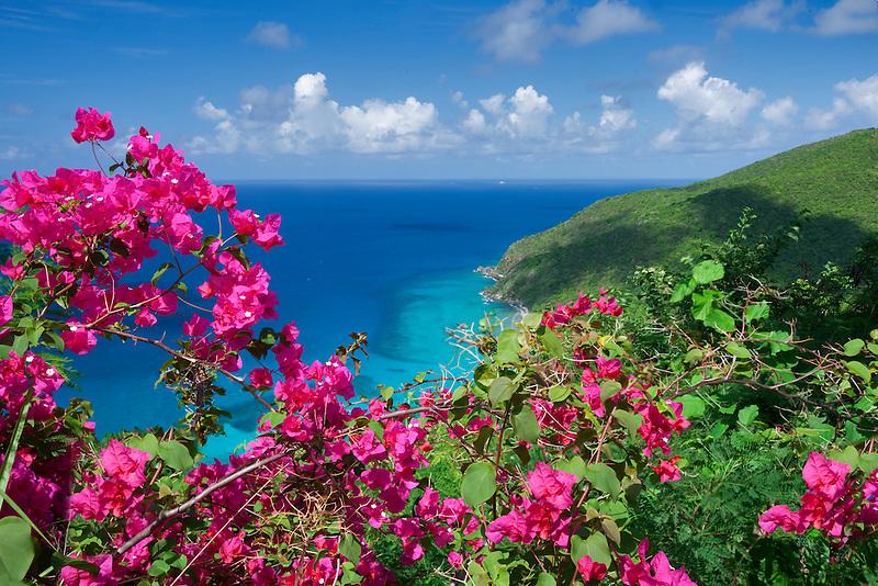 Bouganvilla  flowers and coast line on St. Thomas. US Virgin Islands
