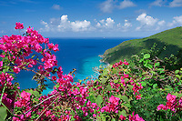 Bouganvilla  flowers and coast line on St. Thomas. US Virgin Islands
