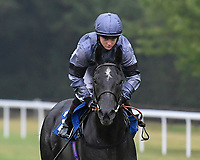 Devils Roc ridden by Hollie Doyle goes down to the start Winner of The Fovant Fillies' Handicap during Horse Racing at Salisbury Racecourse on 13th August 2020