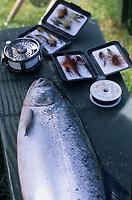 "Europe/Grande-Bretagne/Ecosse/Moray/Speyside/Spey River : Ian Gordon ""gilly"" guide de pêche - Prise d'un saumon - Saumon, mouches et moulinet"