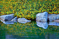 Garden stream with rocks and flowers. Palm Desert, California