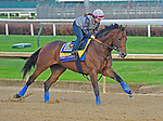 October 31, 2018 : West Coast, trained by Bob Baffert, gallops in preparation for the Breeders' Cup Classic at Churchill Downs on October 31, 2018 in Louisville, KY. Jessica Morgan/ESW/CSM
