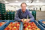 """Foto: VidiPhoto<br /> <br /> ZALTBOMMEL – Veilingmeester Dick Vos is inmiddels 40 jaar in dienst van Fruitveiling Zaltbommel. Groenten en fruit zijn nu populairder dan ooit en de prijzen zijn al een jaar lang hoog. Telers verdienen nu goed geld,"""" constateert hij."""