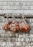 Lobster bait bags hang on a dock side shed, Bass Harbor Maine, USA