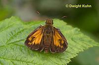 LE04-501z Hobomok Skipper Butterfly, Poanes hobomok