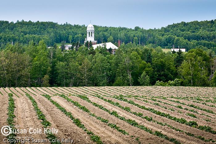 Potato fields in Madawaska, Aroostook County, ME