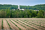 Potato fields in Madawaska, Aroostook County, ME