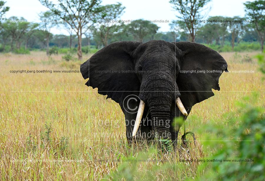 UGANDA, Kasese, Queen Elizabeth Nationalpark, elephant/ Elefant im Queen Elizabeth Nationalpark