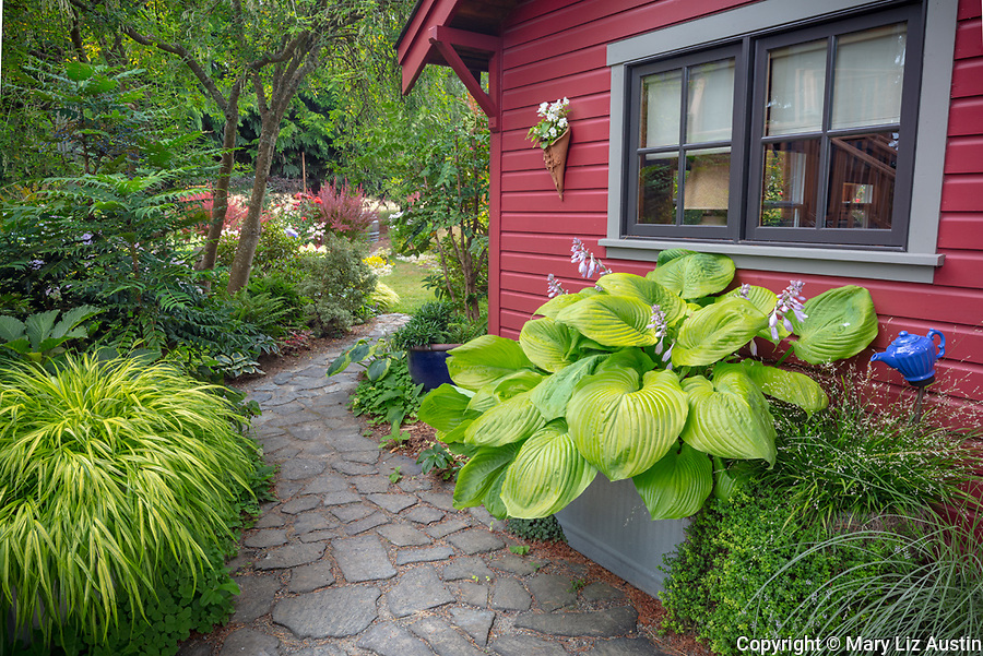 Vashon-Maury Island, WA: Stone pathway and planters with hosta 'Sum and Substance and Japaniese forest grass