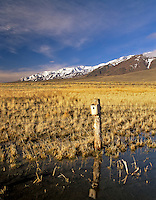 Birdhouse on shore of Mann Lake with Steens Mountain. Oregon.